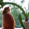 Любительницам комнатных растений: цветы и атмосфера в доме