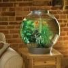 Как ухаживать за аквариумом – на здоровье рыбкам