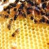 Пчелиный воск и его применение в косметологии – актуальная тема всех времен и народов