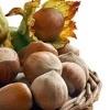 Фундук: лесной орех