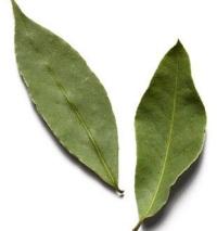 Лечебные свойства лаврового листа и полезные средства из него