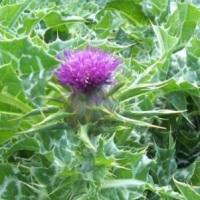 полезные свойства травы