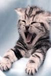 удивительные факты кошки