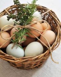 Куриные яйца: универсальный и незаменимый продукт