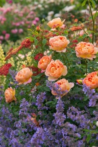 Какие цветы посадить на даче – ароматные грядки