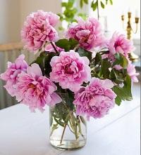 Как сохранить срезанные пионы: что необходимо цветам