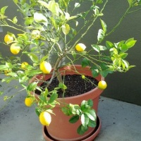 Что можно вырастить на подоконнике – овощи в доме